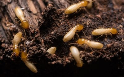 3 Ways to Prevent Termite Infestations