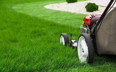 Basic Summer Lawn Care Tips